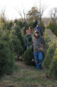 Hauling Christmas Tree at Every Soul Acres Farm