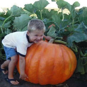 In the Pumpkin Patch