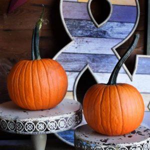 Pumpkins at Every Soul Acres Pumpkin Patch
