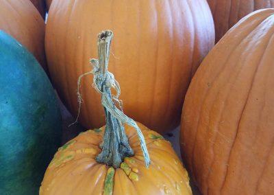med pumpkins