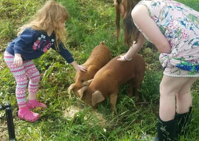 petting the pigs at Every Soul acres