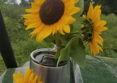 Picked sunflowers